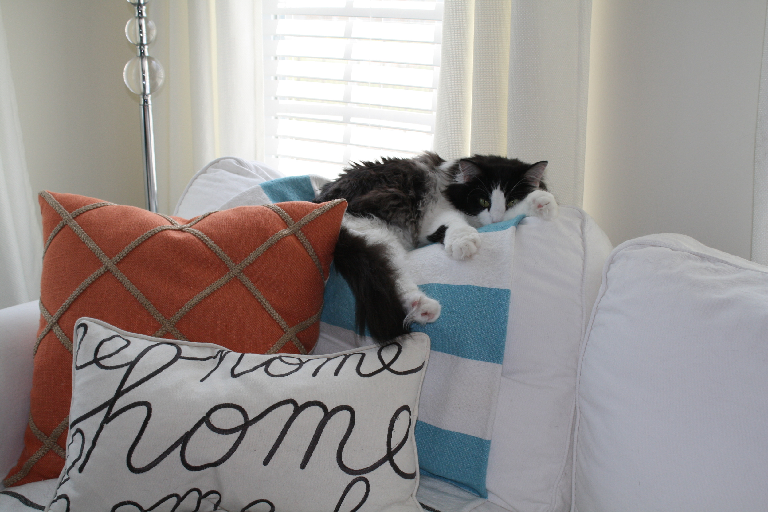 This is my office assistant Bandit, in his afternoon spot. He's the friendliest of our cats (we have 3!) so that's why he's in a lot of these pics. I love the way his leg is hanging off the couch.