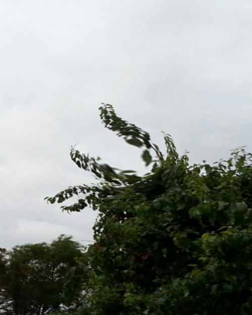 """""""Tree Sign Language""""   (Manipulated photo, portrait orientation.) Fully leafed trees, completely green, pine colored. Four branches of the largest tree rise into the sky and point to the left, the top two slightly turned up, with a wide space between them, the bottom two turned down, with a smaller space between them."""