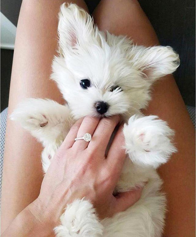 Happy Friday!! Ok serious question: Puppy or Ring?! Tell me below👇🏻 Regram via @weddingforward