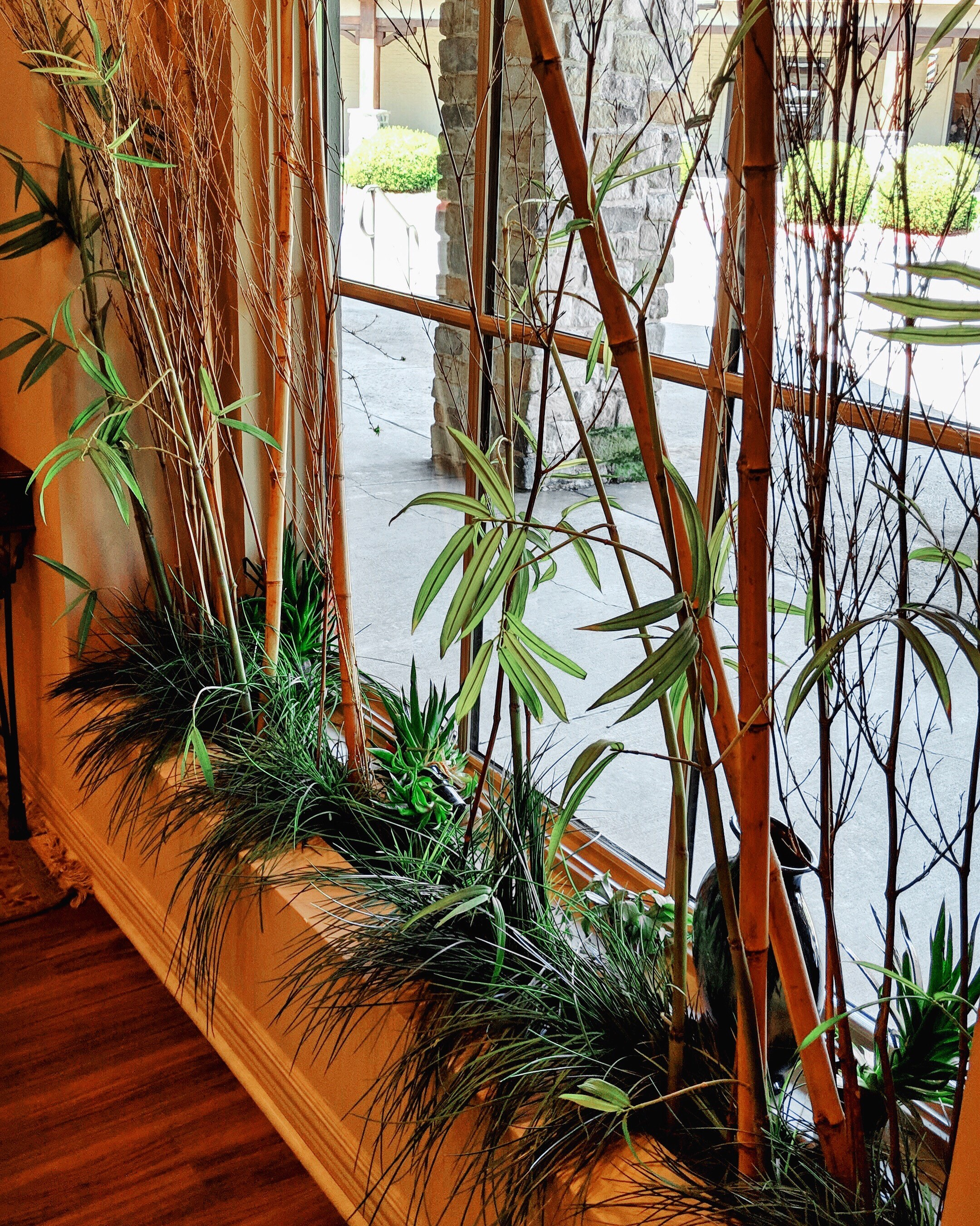 Window Sill with Plants.jpg