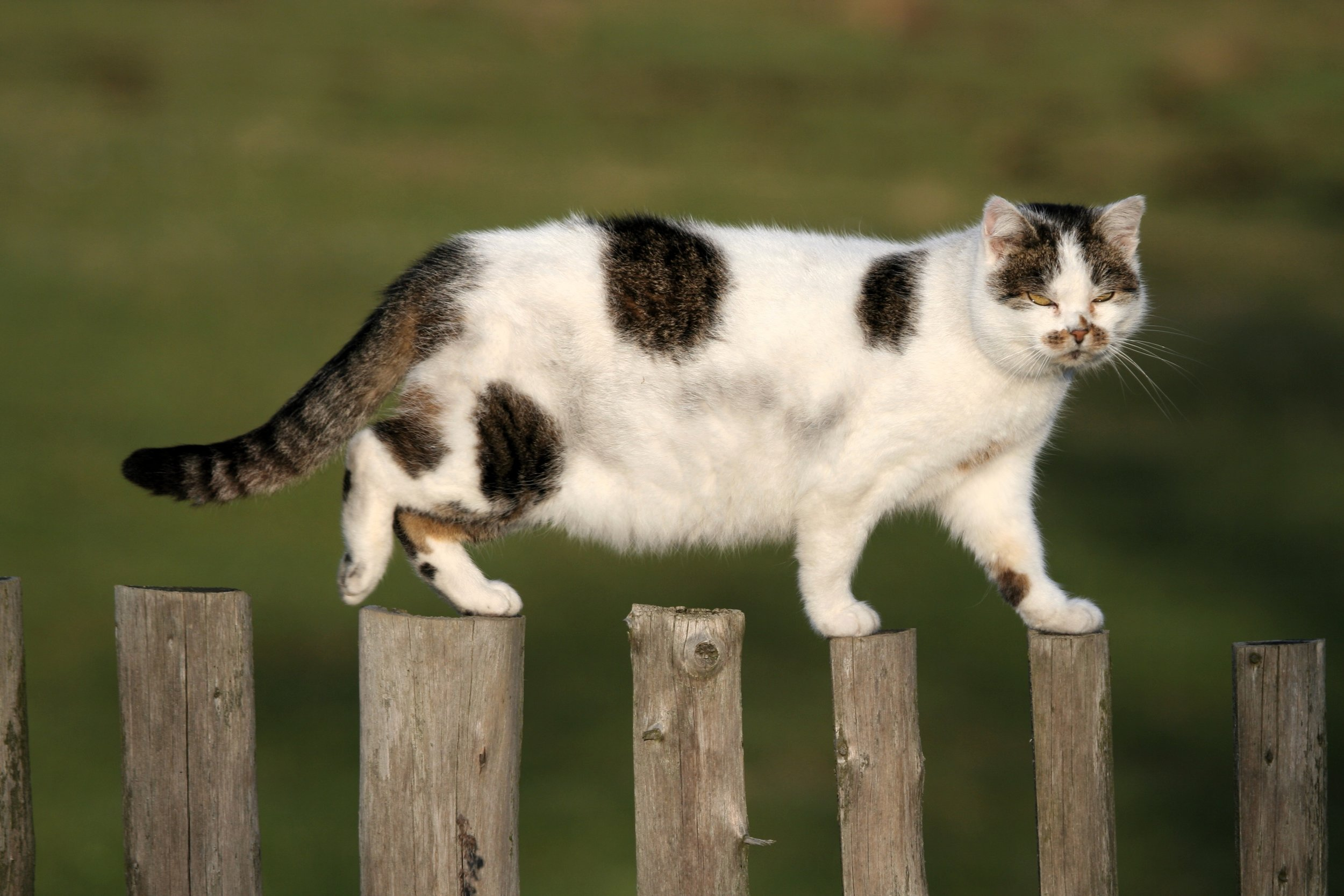 Cat Physiotherapy - Physiotherapy - Rehabilitation - JHHPhysiotherapy