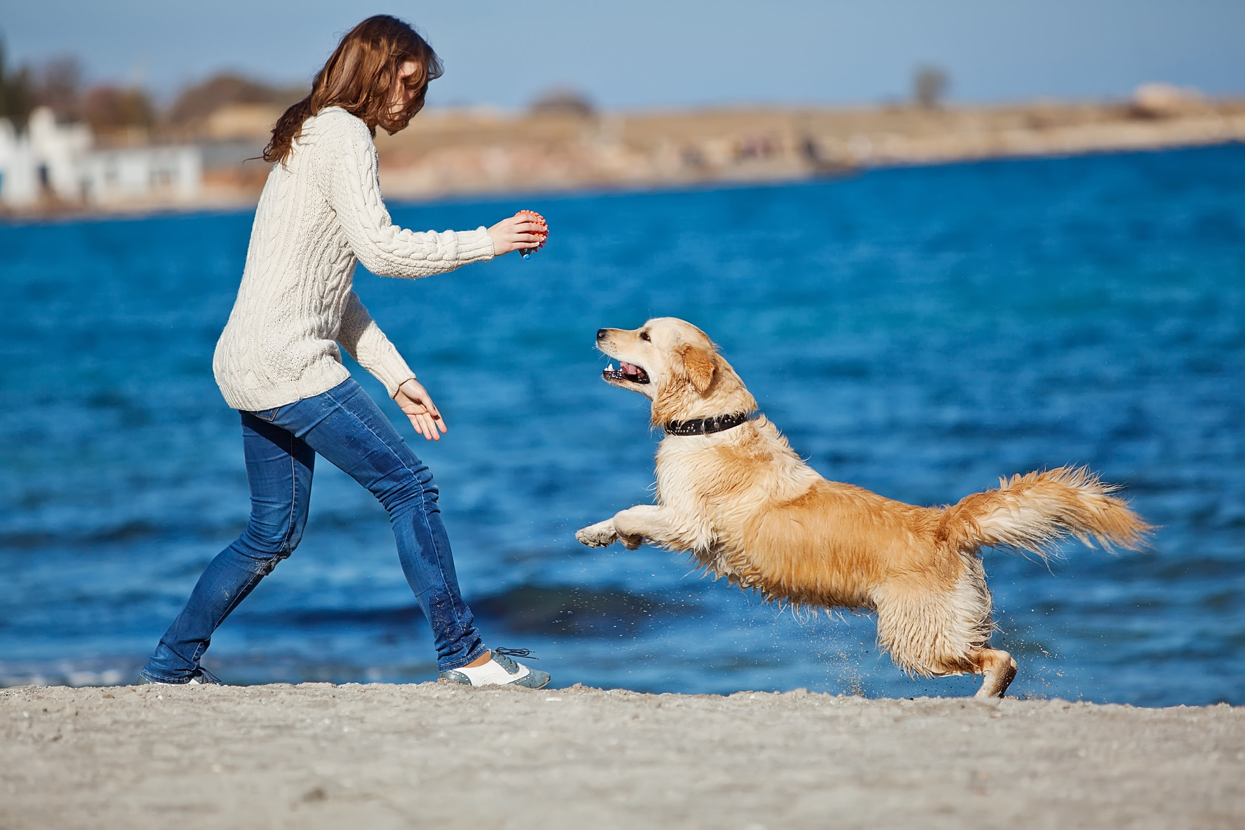 JHH Physio how to see your hound like a Physiotherapist does…