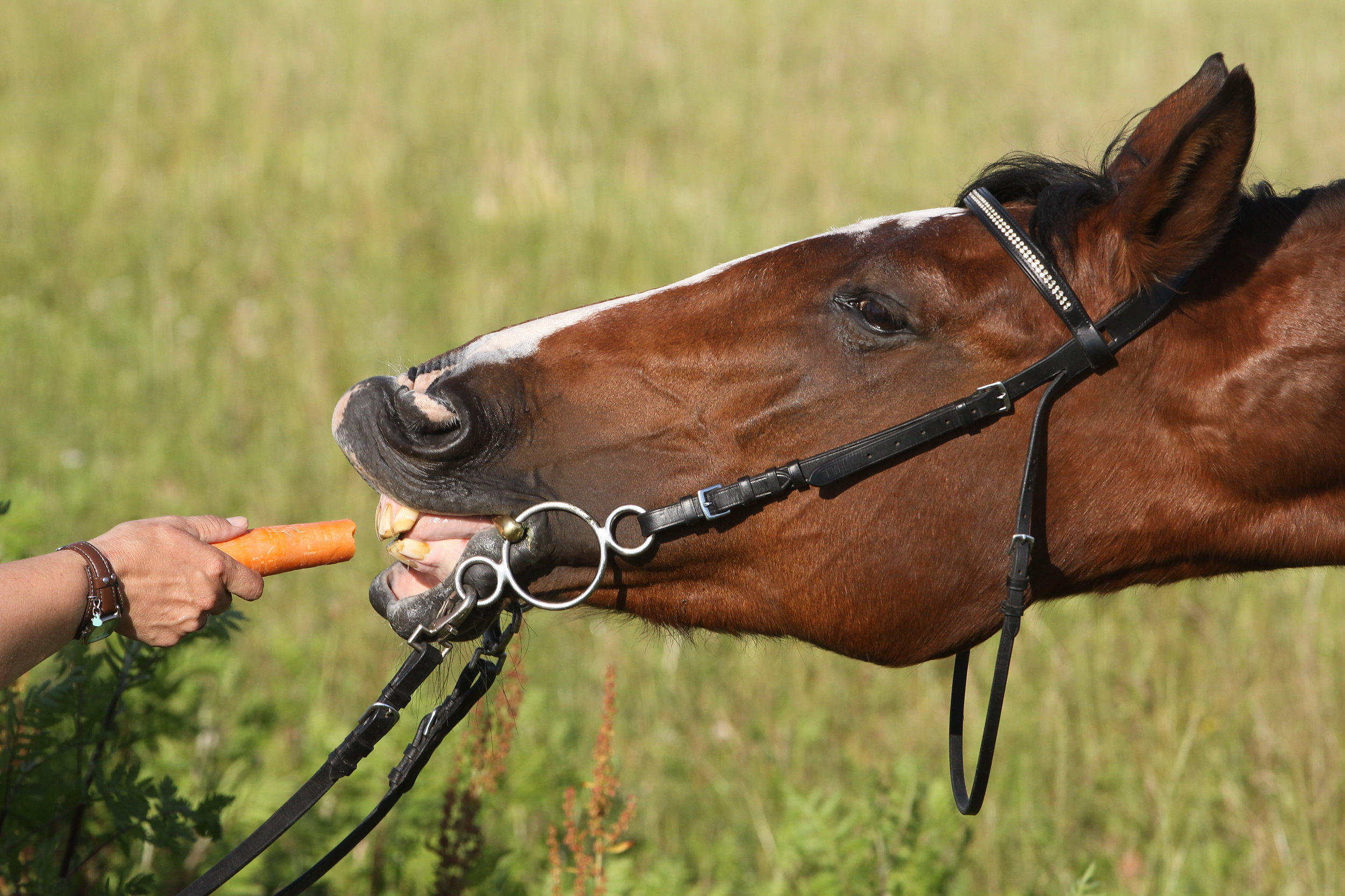 JHH Physio Your Horses's Quality of Life Matters