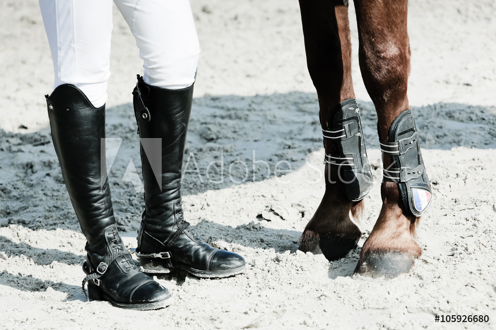 JHH Physio Horse and Rider Physiotherapy