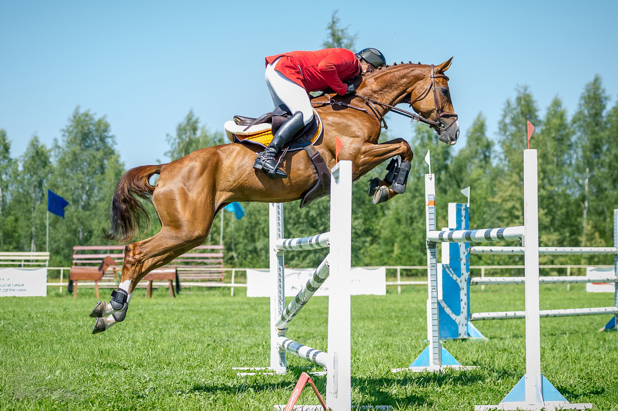 Equine horse and rider show jumping .jpeg