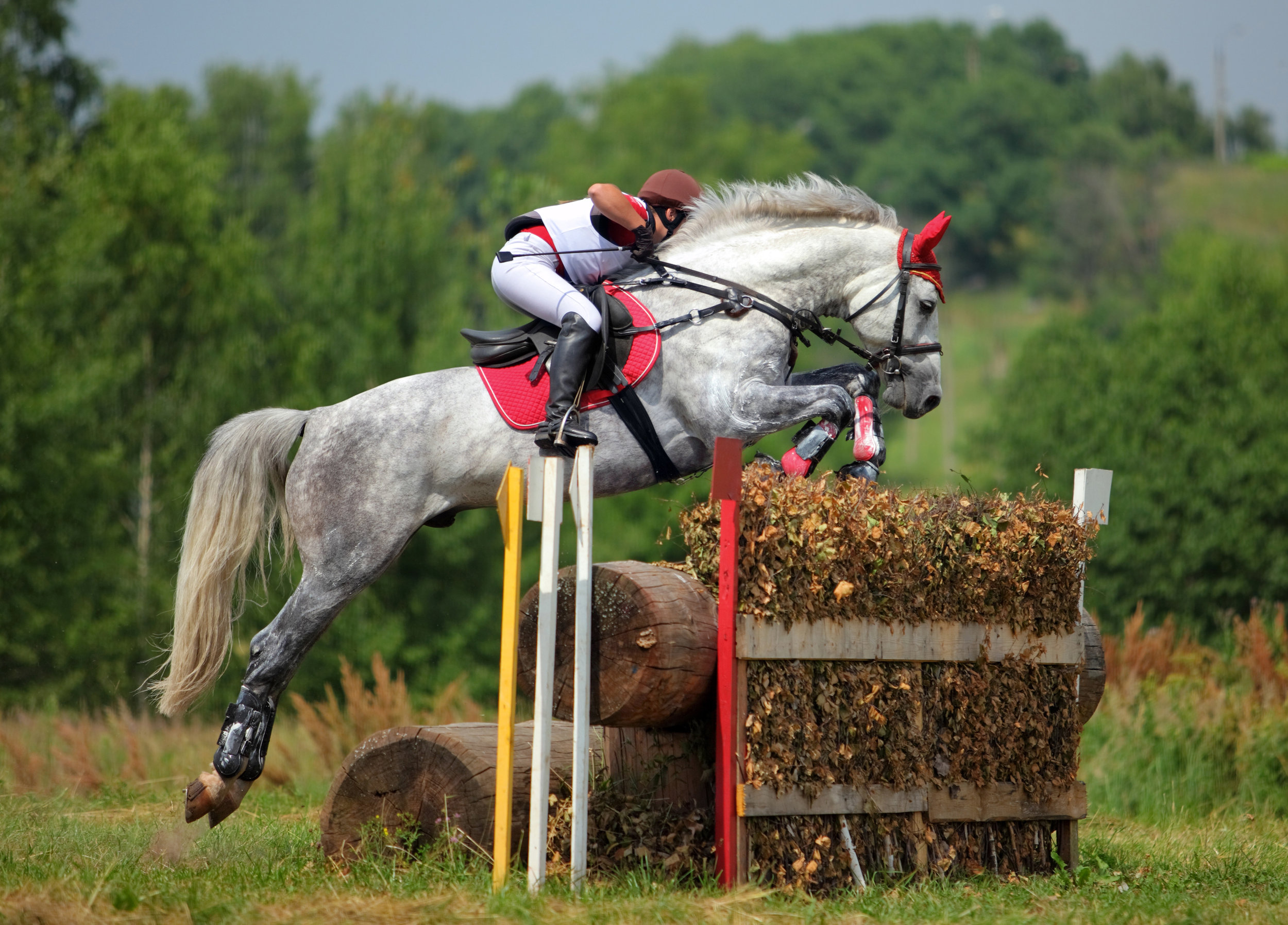 Equine horse and rider cross country .jpeg