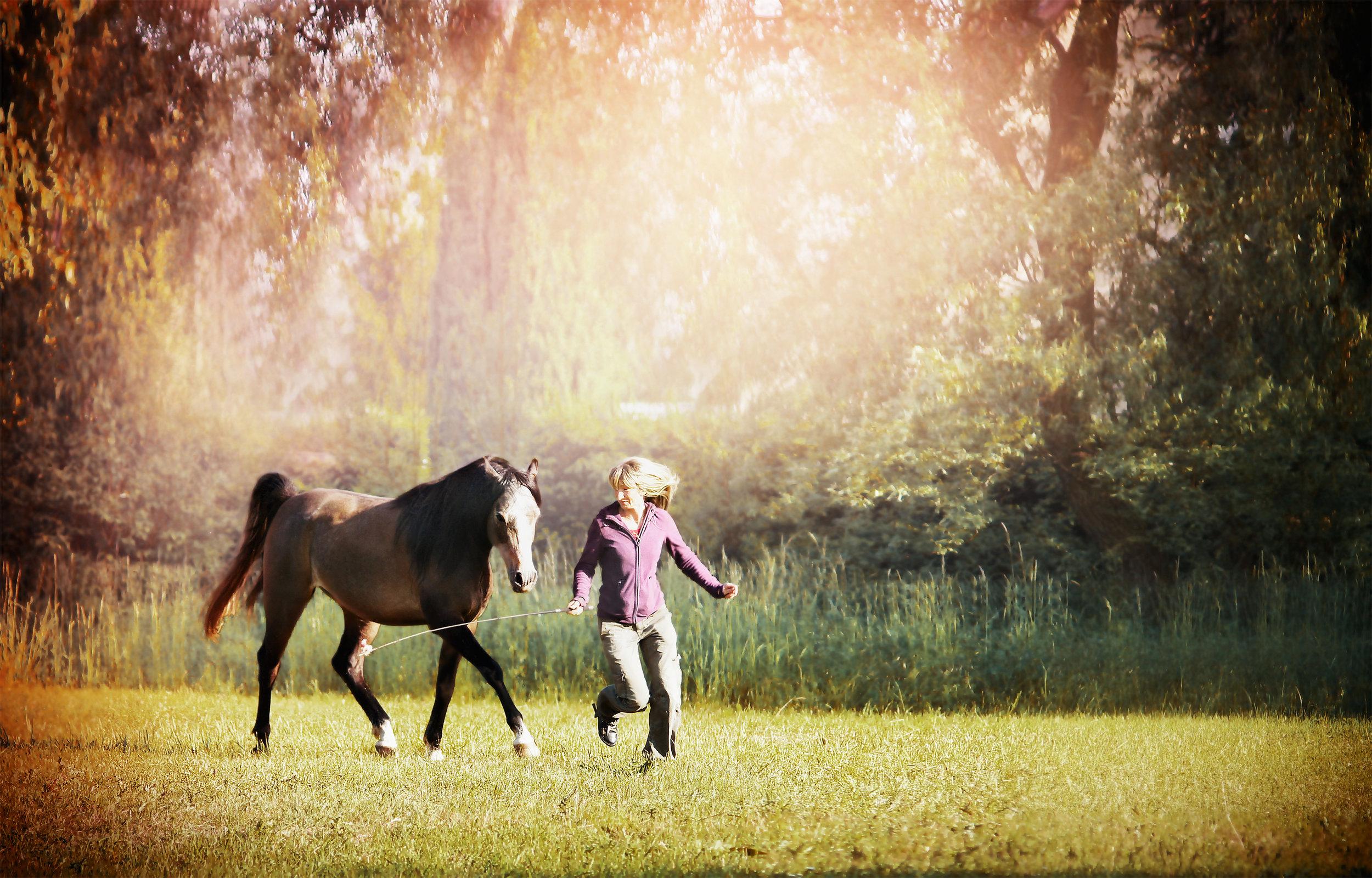 Equine rider on ground.jpeg