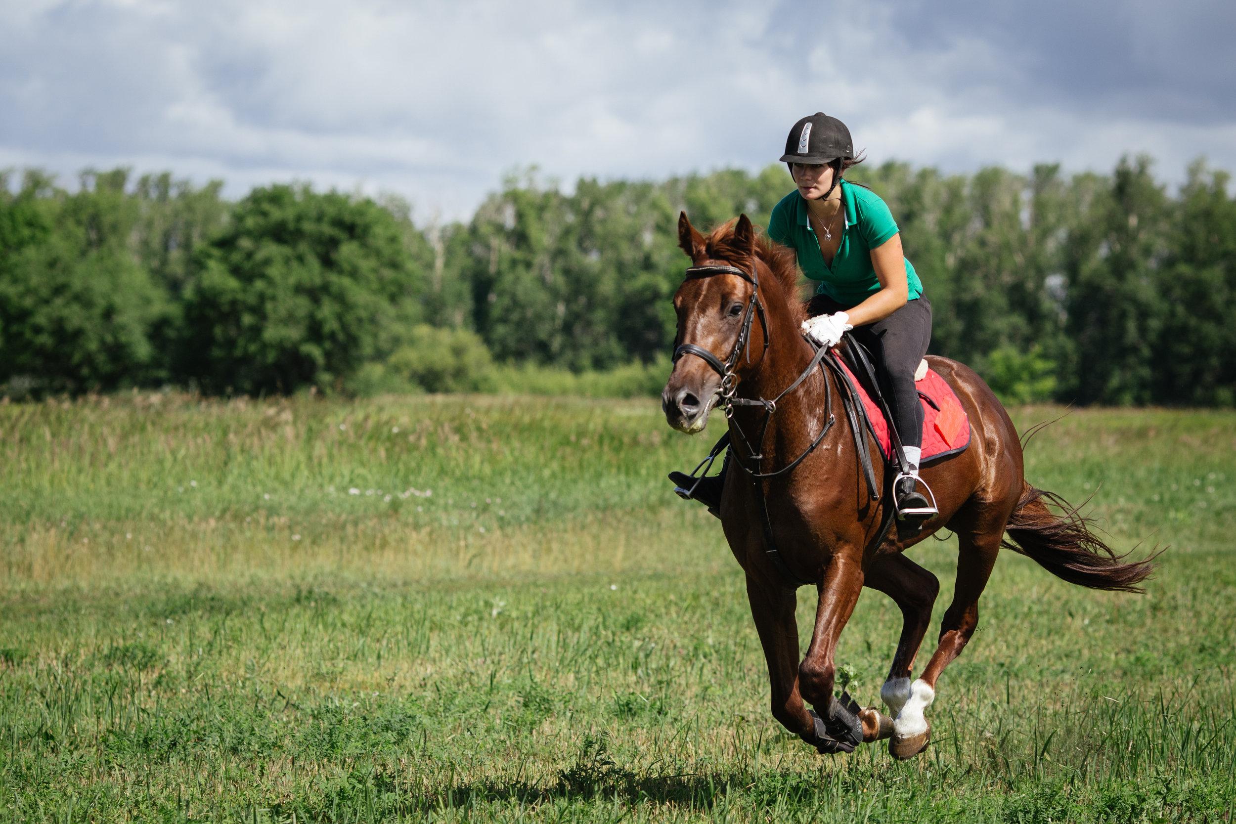 Equine galloping.jpeg