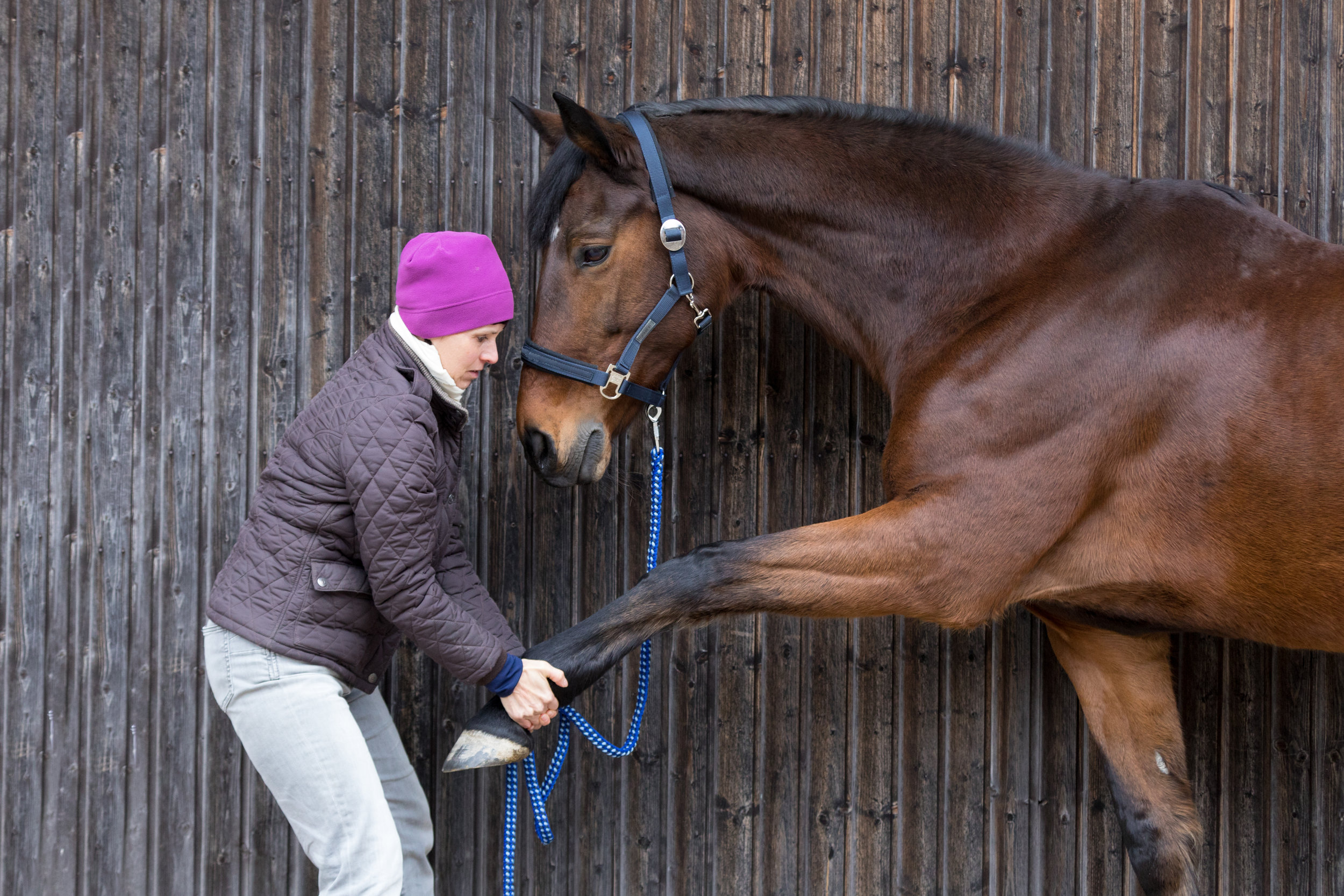 JHH Physio equine assessment
