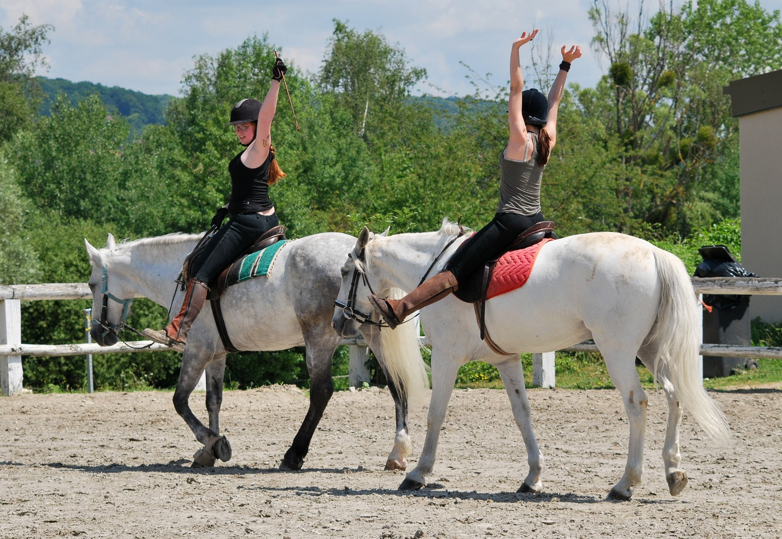 Equine horse and rider exercise .jpeg