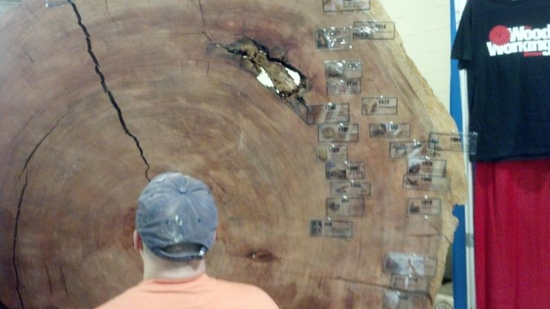 Ancient tree slab