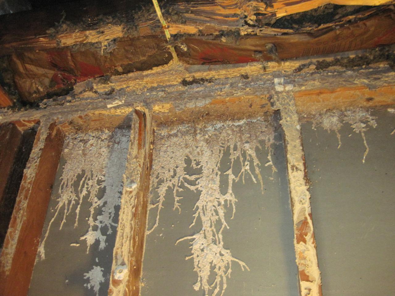 Termite_Damage.68104646_large.jpg