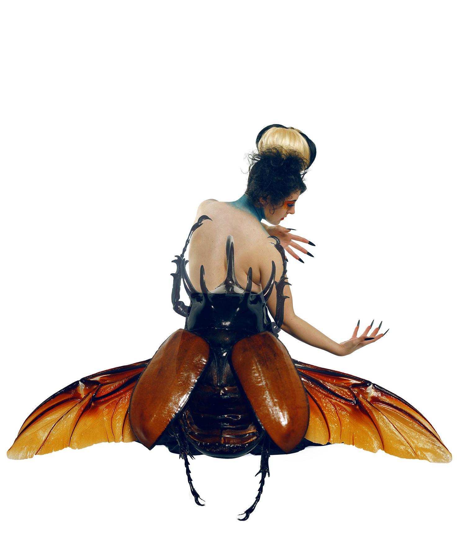 Beetle 1-2