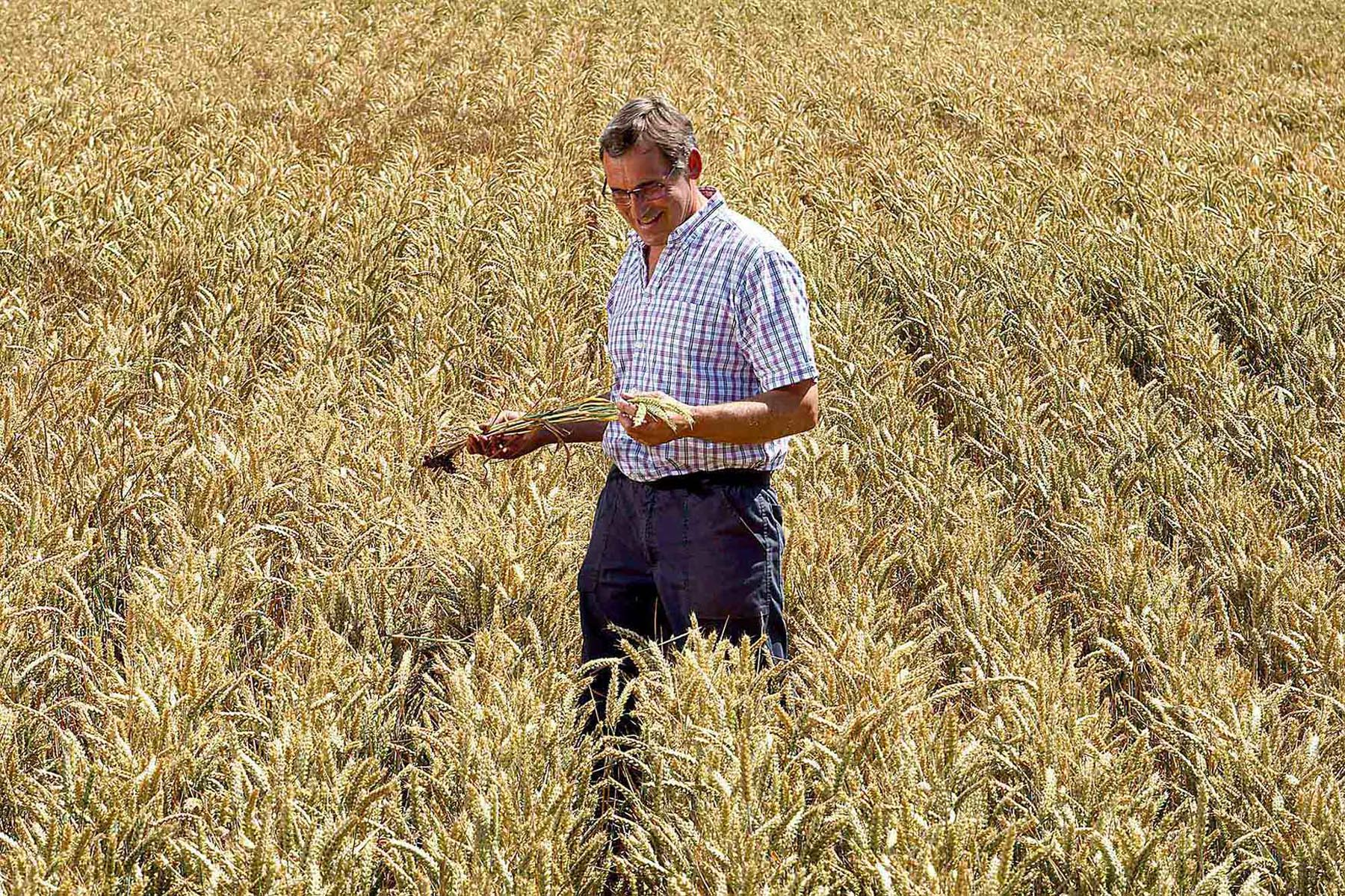 Kevin Mallett Man In a Cornfield
