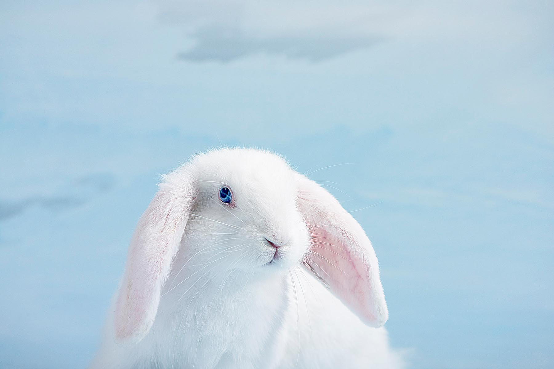 Kevin Mallett - Albino Rabbit