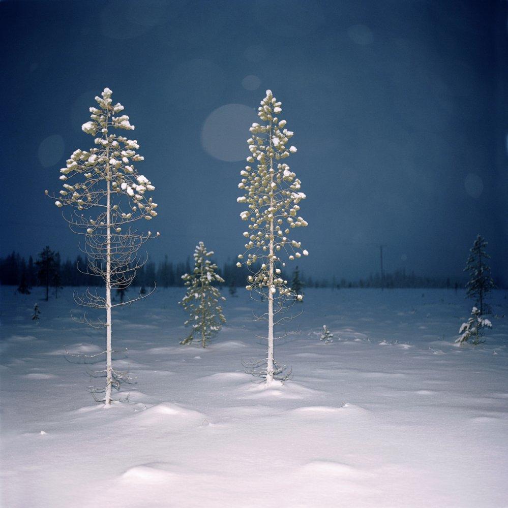 Roy Mehta Finland Snowscape