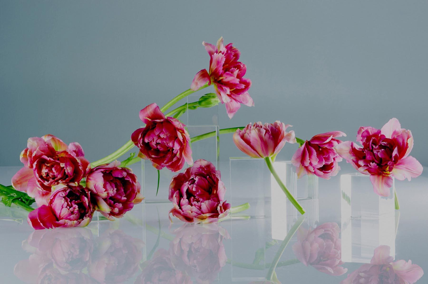 Noel McLaughlin Pink Flowers