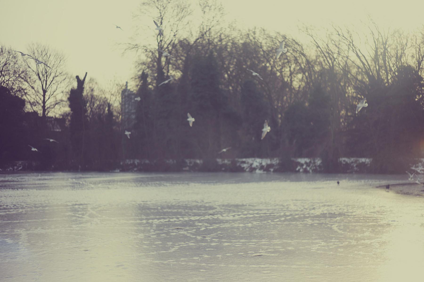 Noel McLaughlin River View