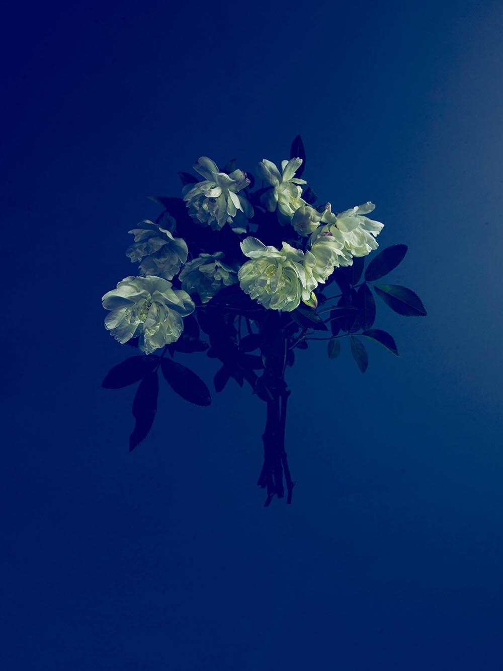 Noel McLaughlin White Flowers