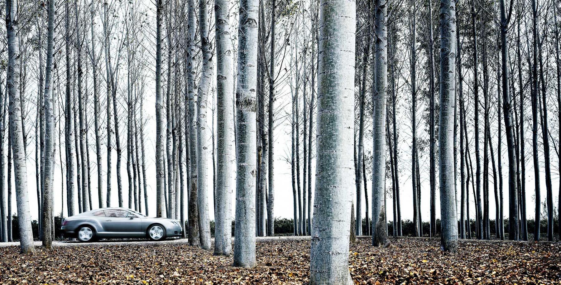 Nigel Harniman Silver Car & Silver Birch Trees