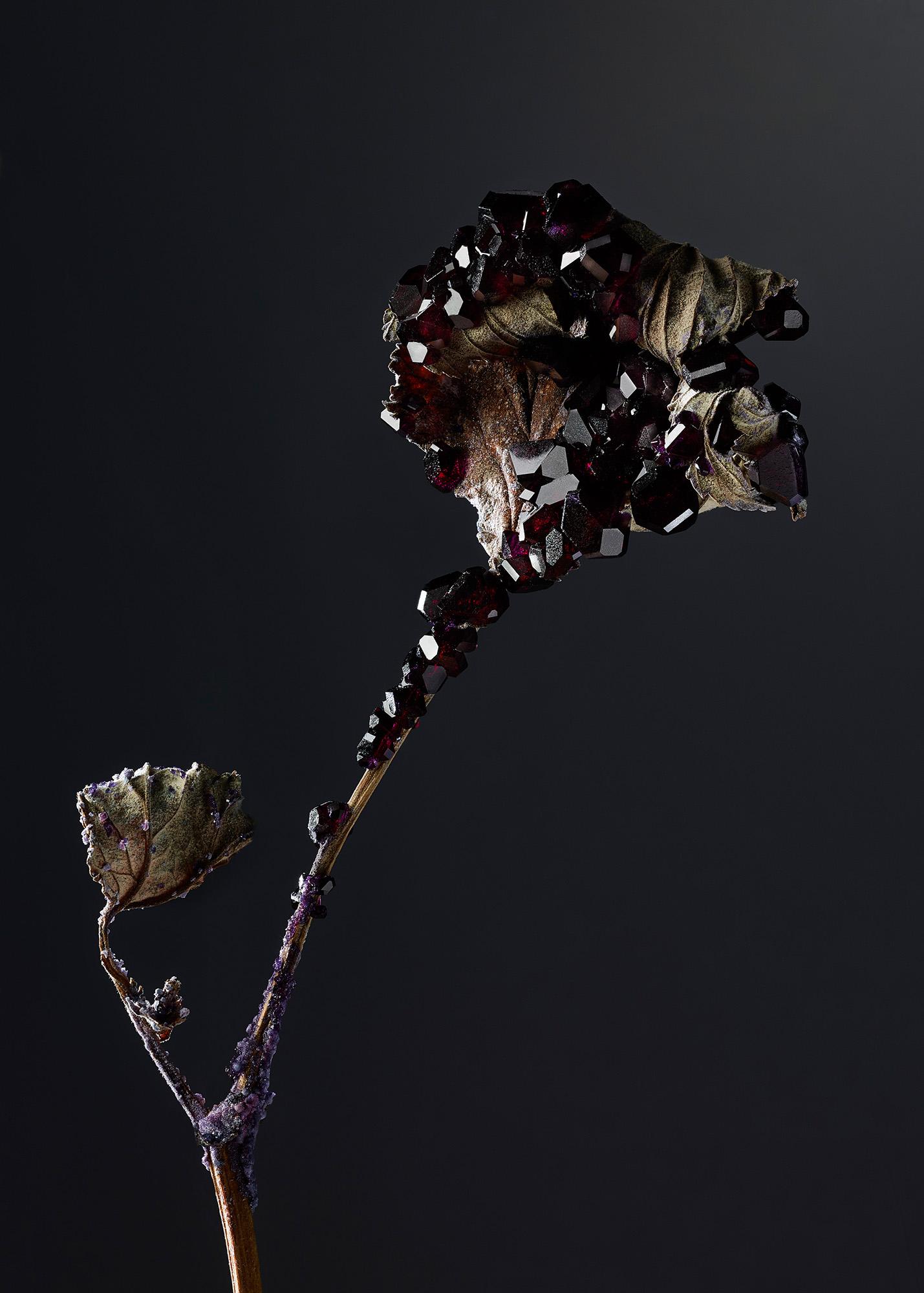 Tal Silverman Black Flower