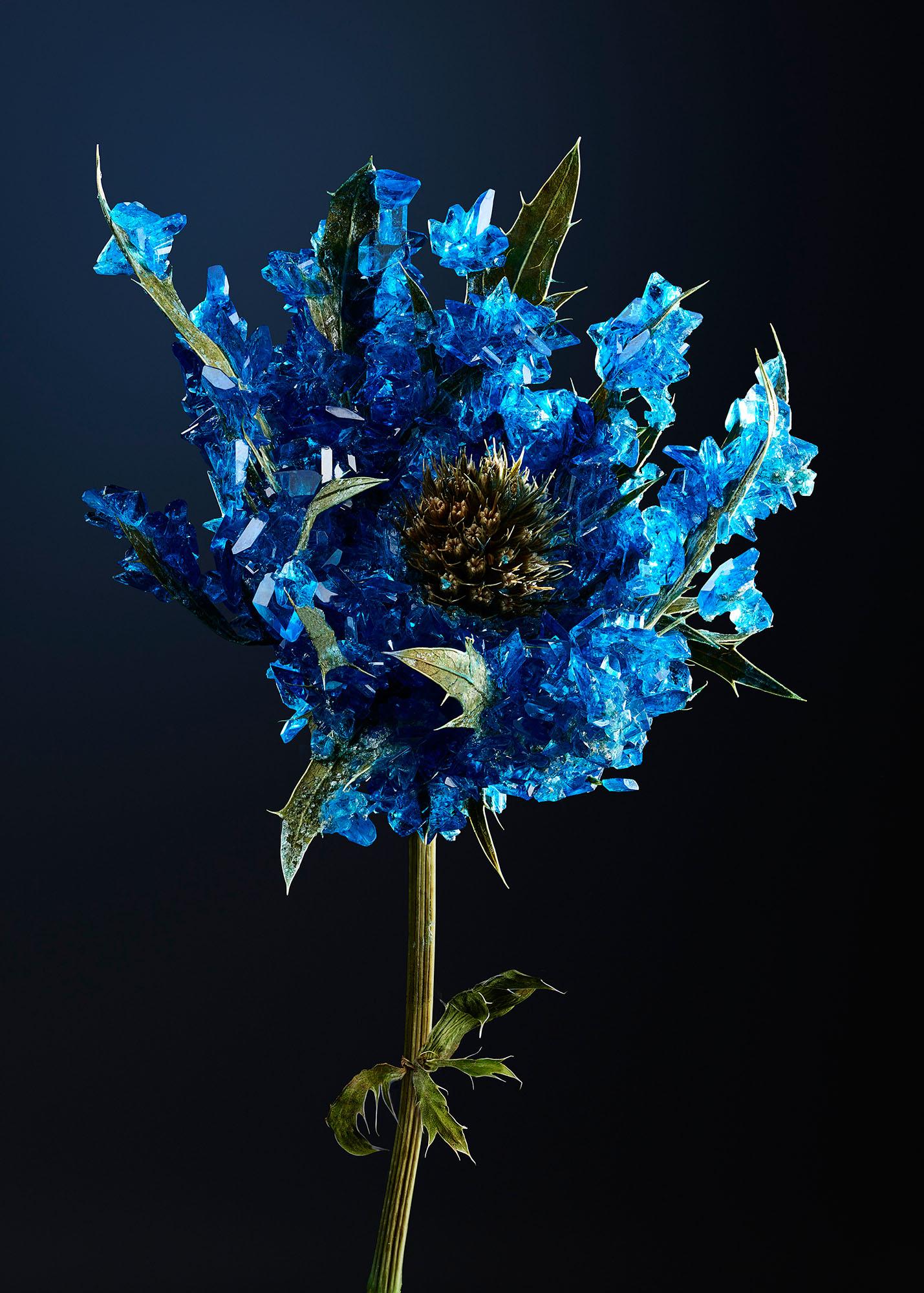 Tal Silverman Blue Flower