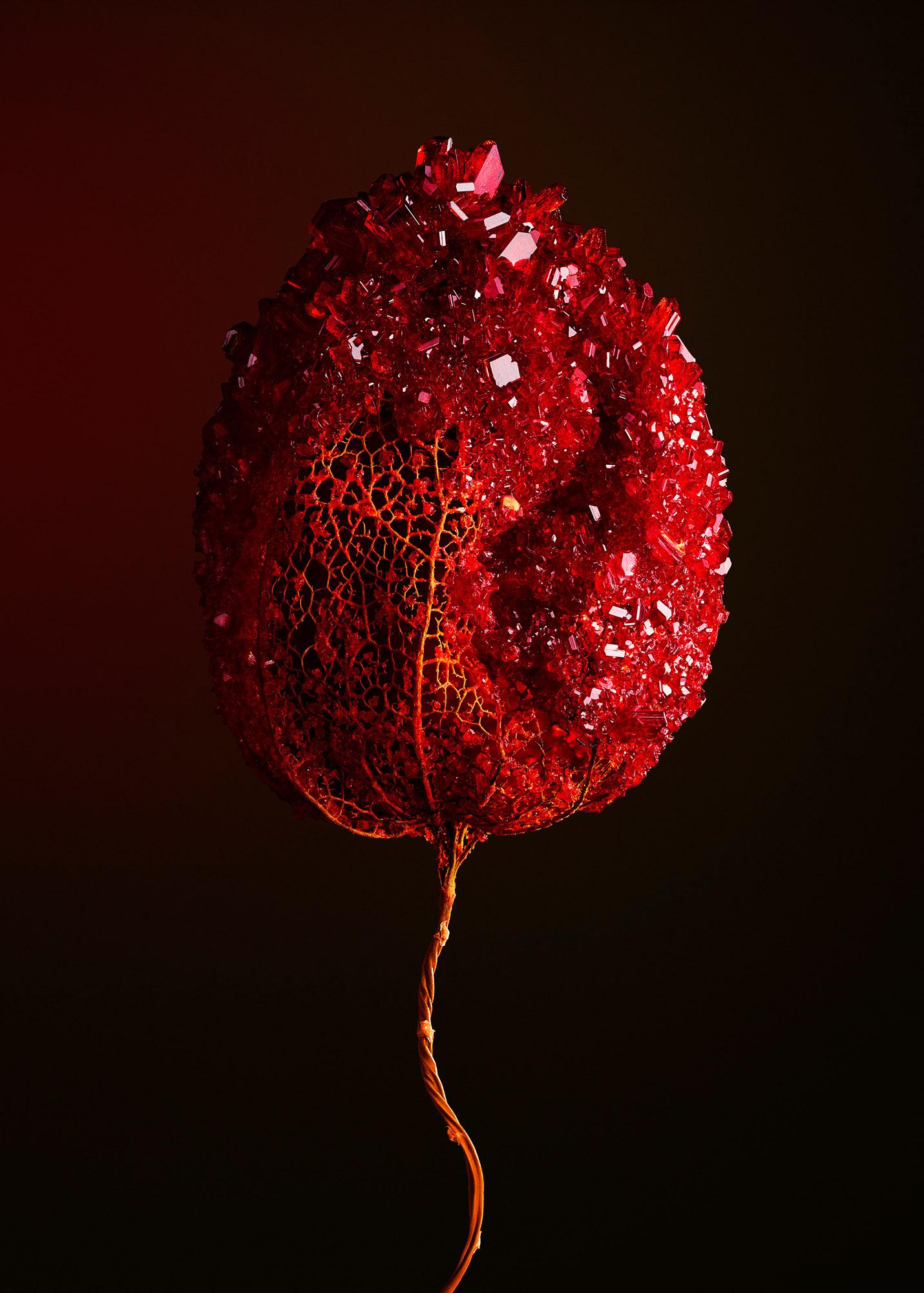 Tal Silverman Red Flower