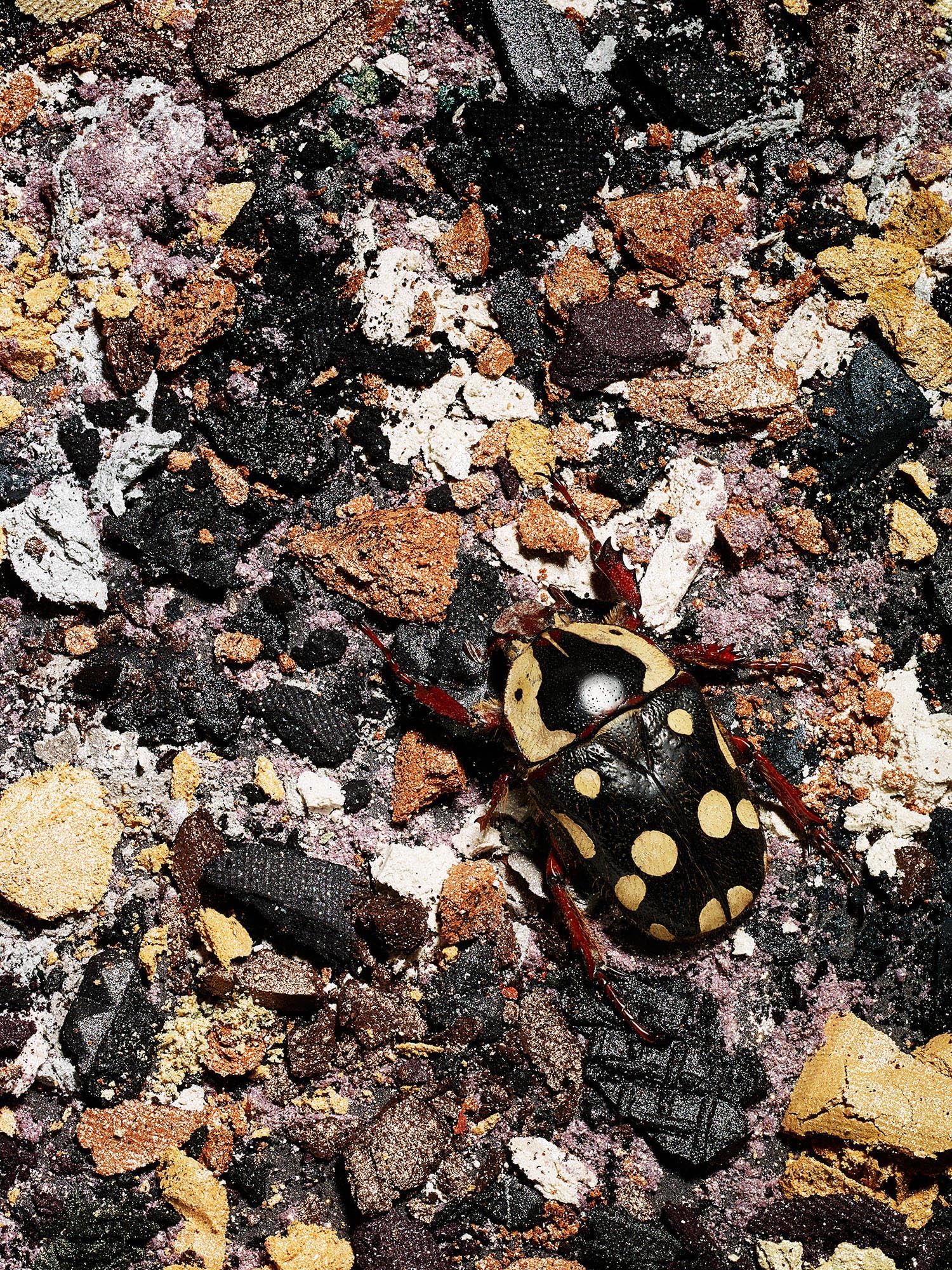 Tal Silverman Beetle