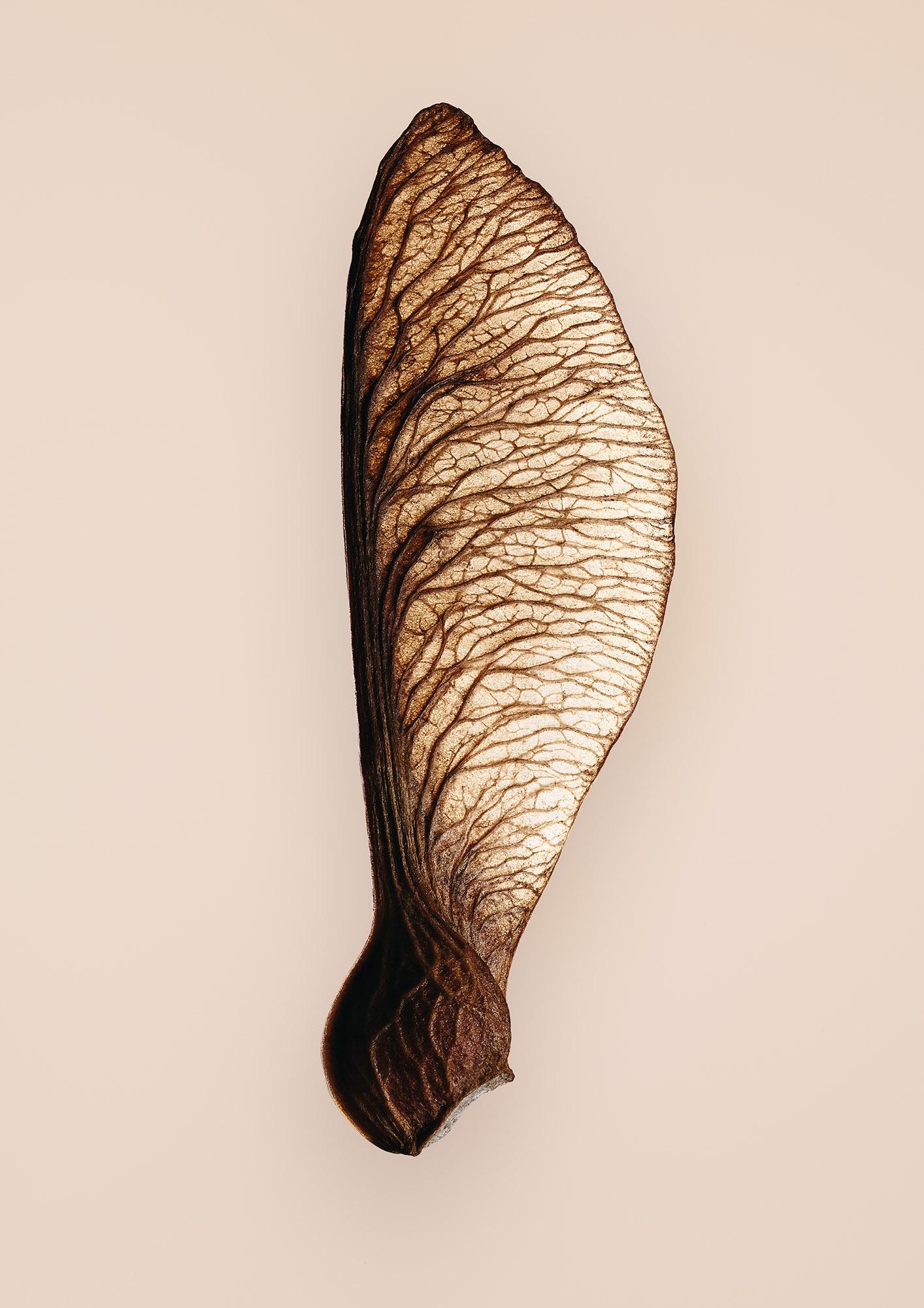 Tal Silverman Leaf