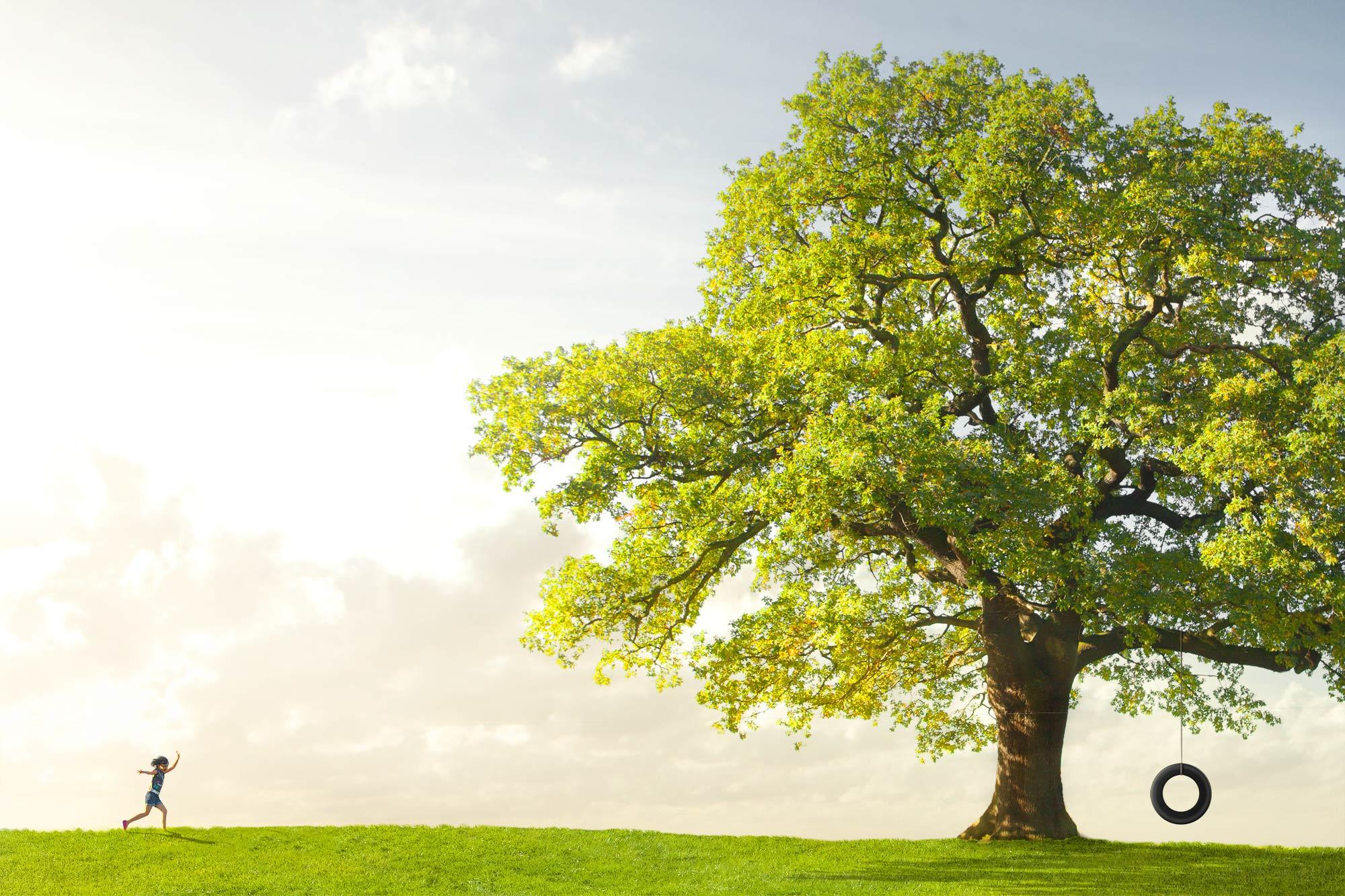 Chris Clor Oak Tree