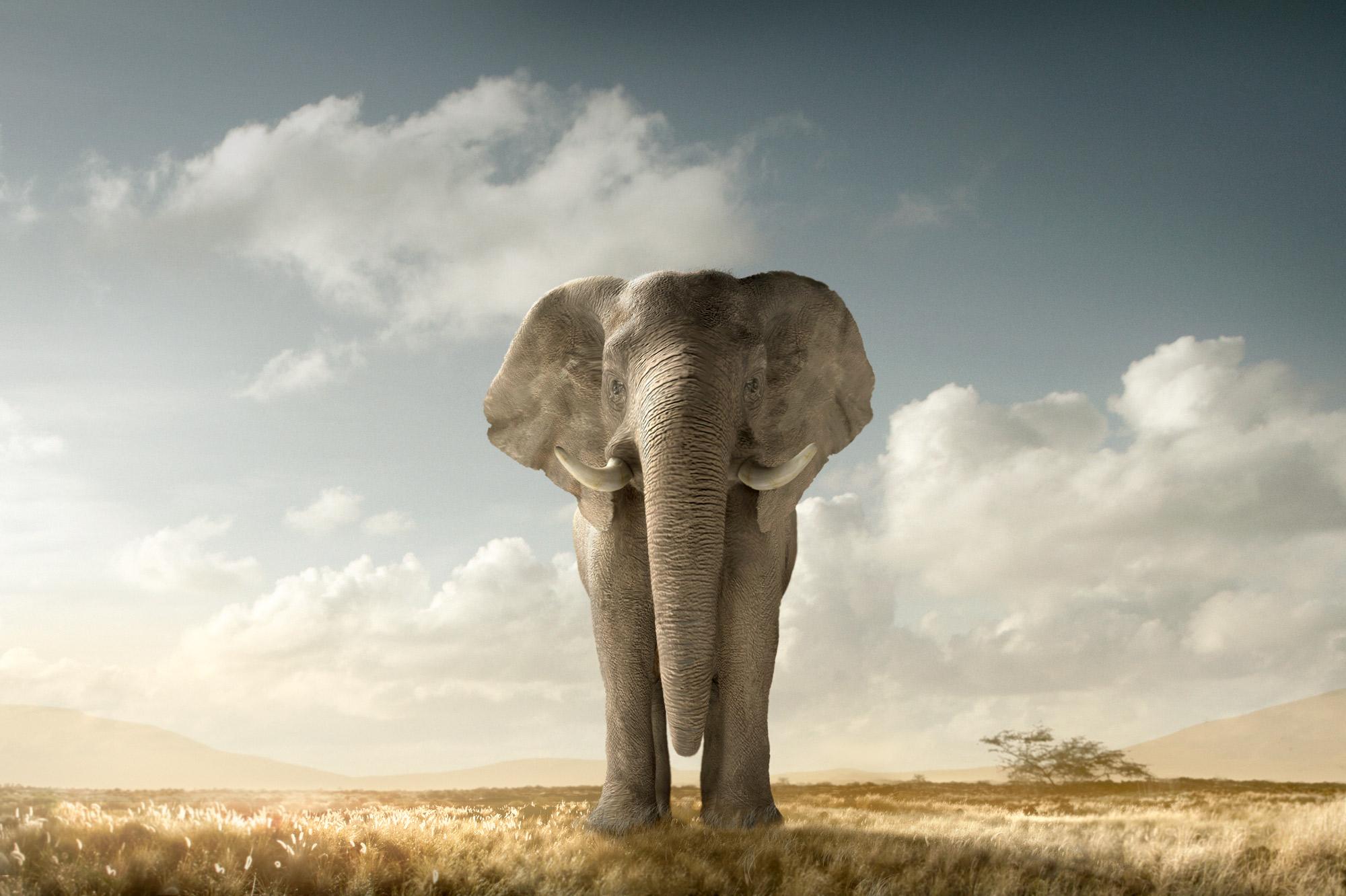 Chris Clor elephant