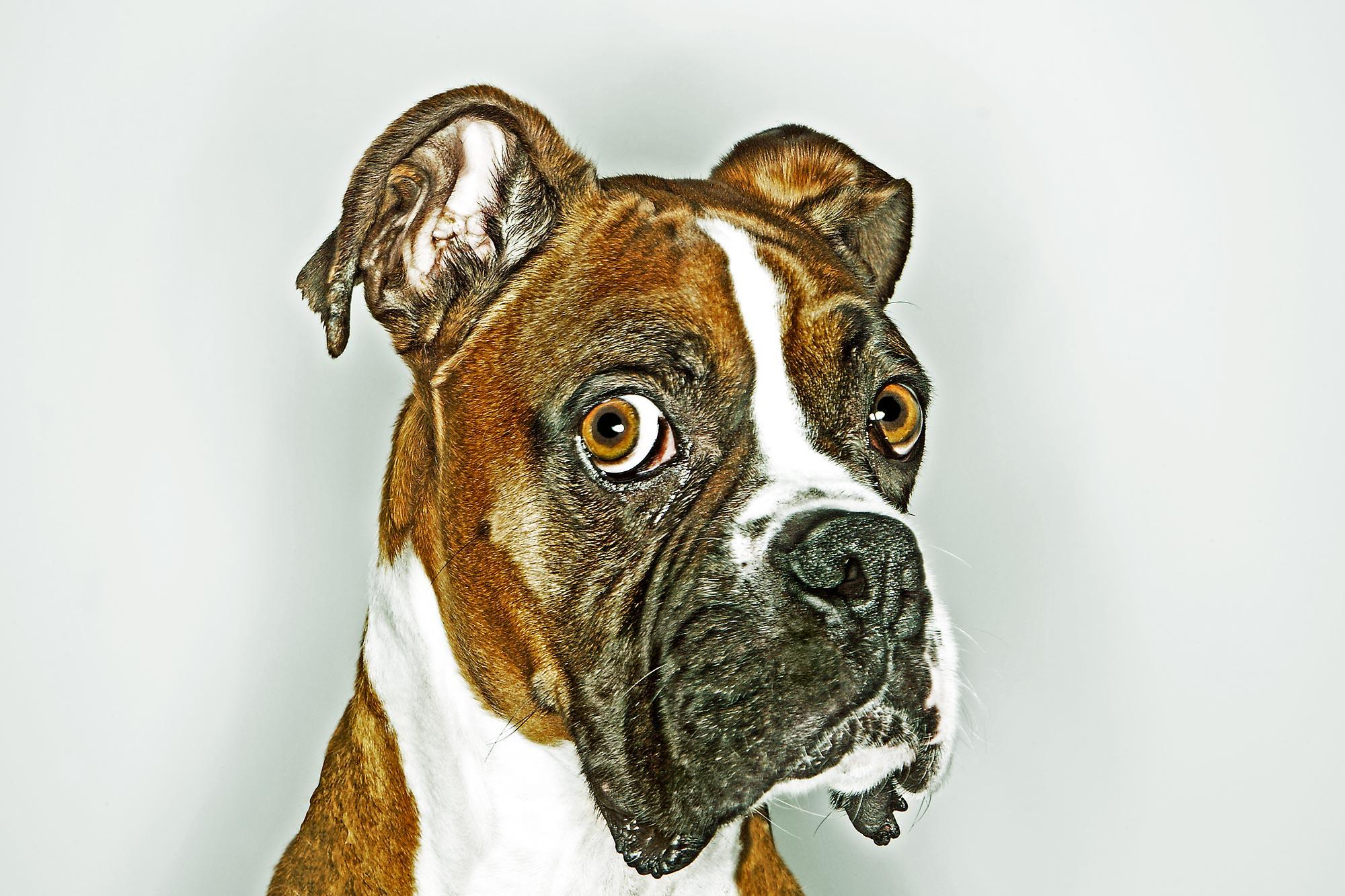 Chris Clor - Bulldog