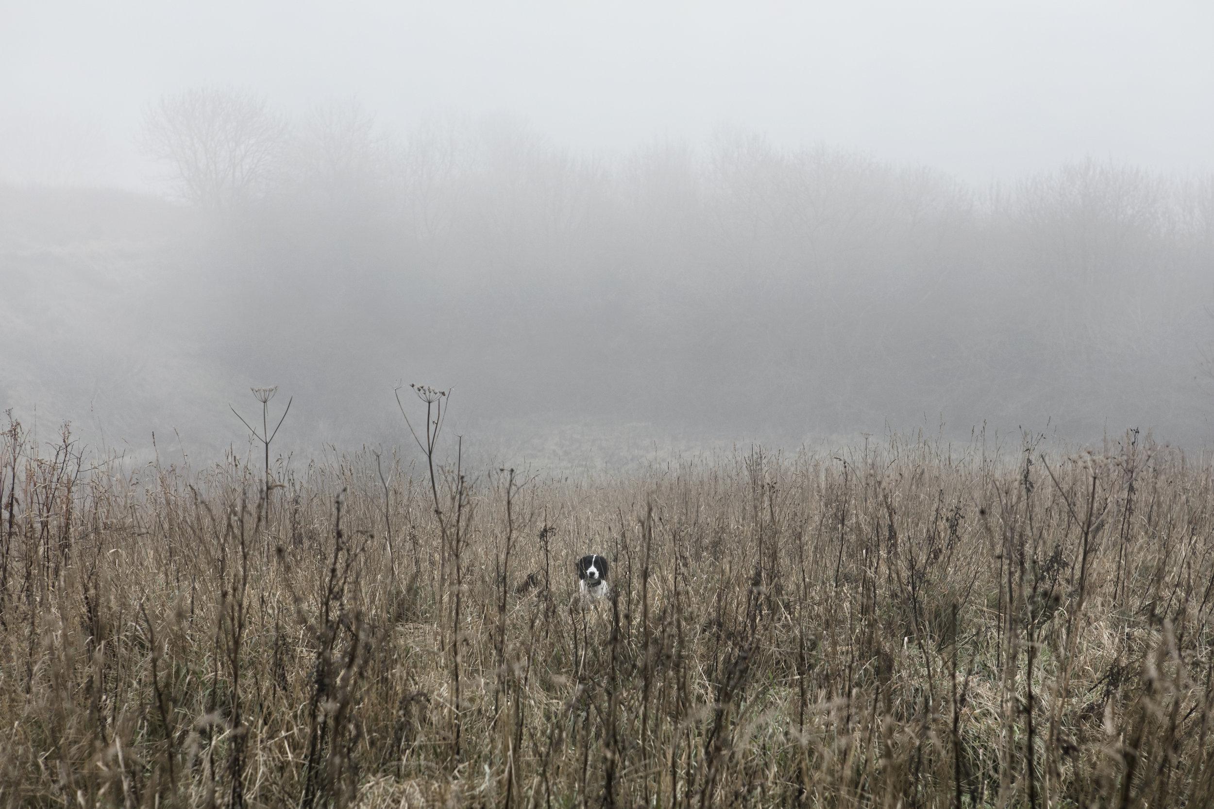 Dan Prince - Misty landscape