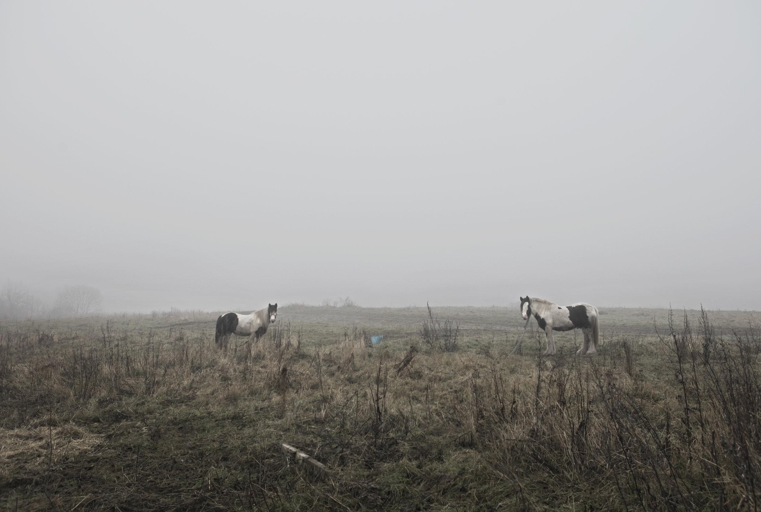 Dan Prince - horses in misty landscape