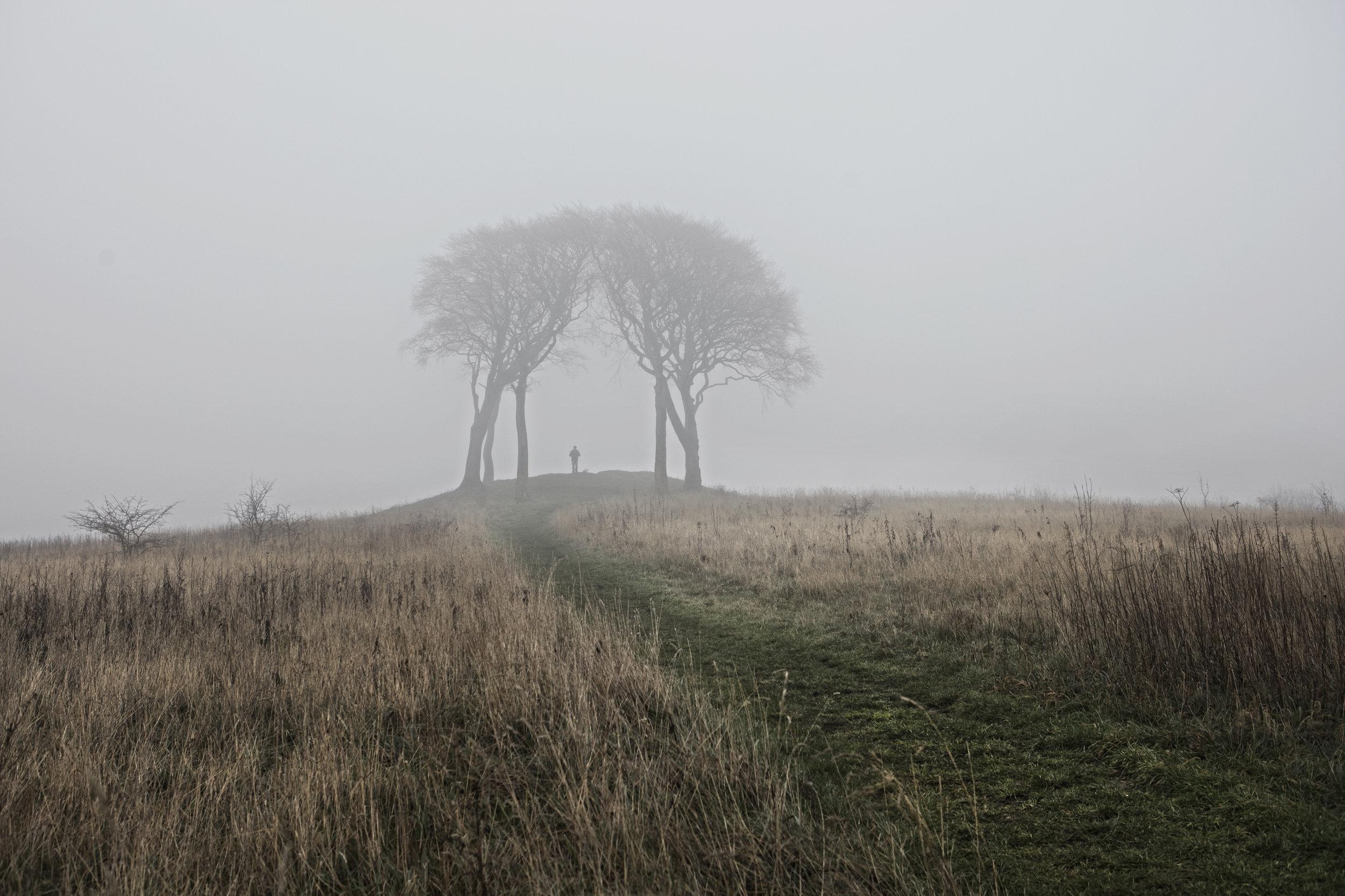 Dan Prince - trees in misty landscape