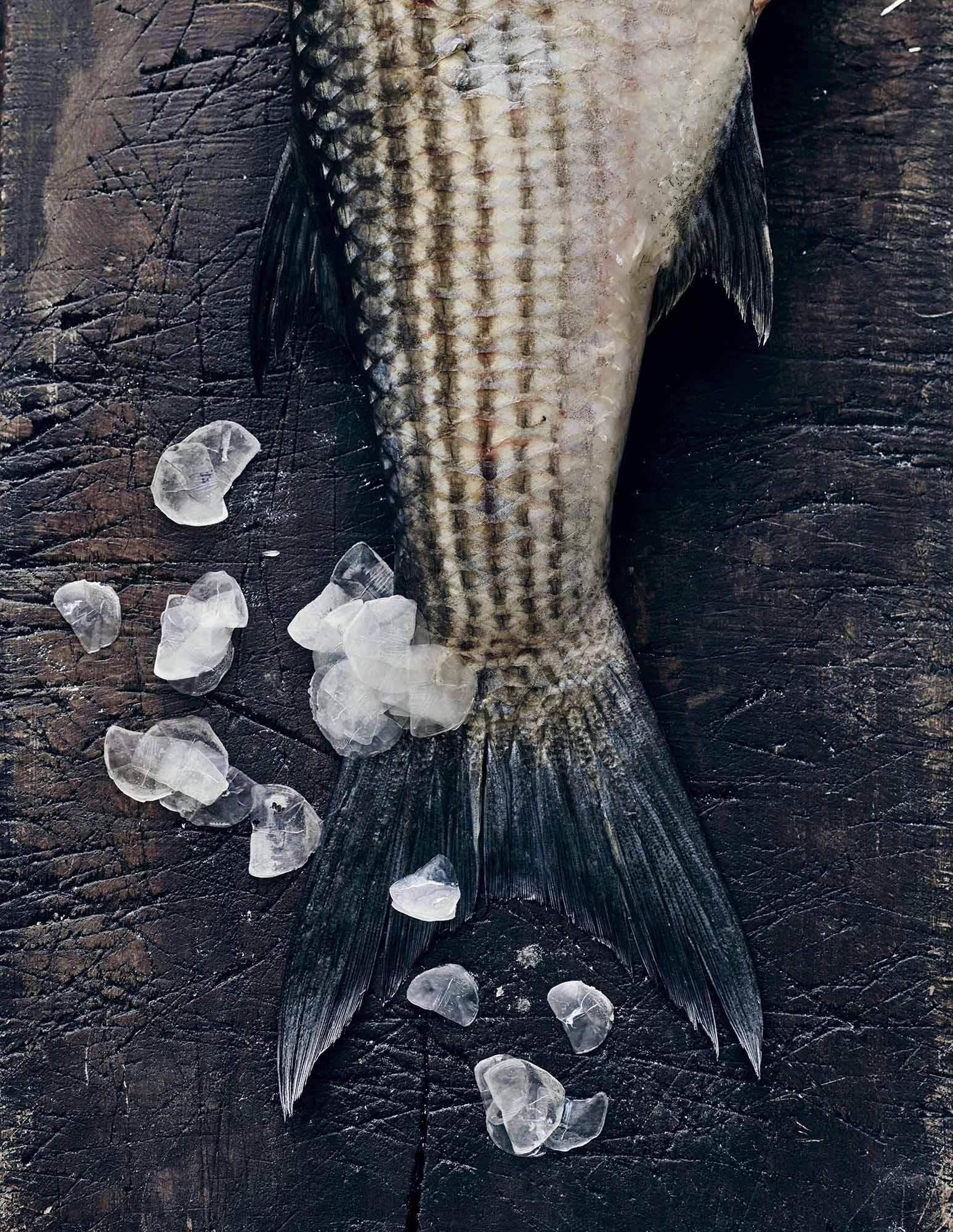 Lars Ranek - fishtail on Ice