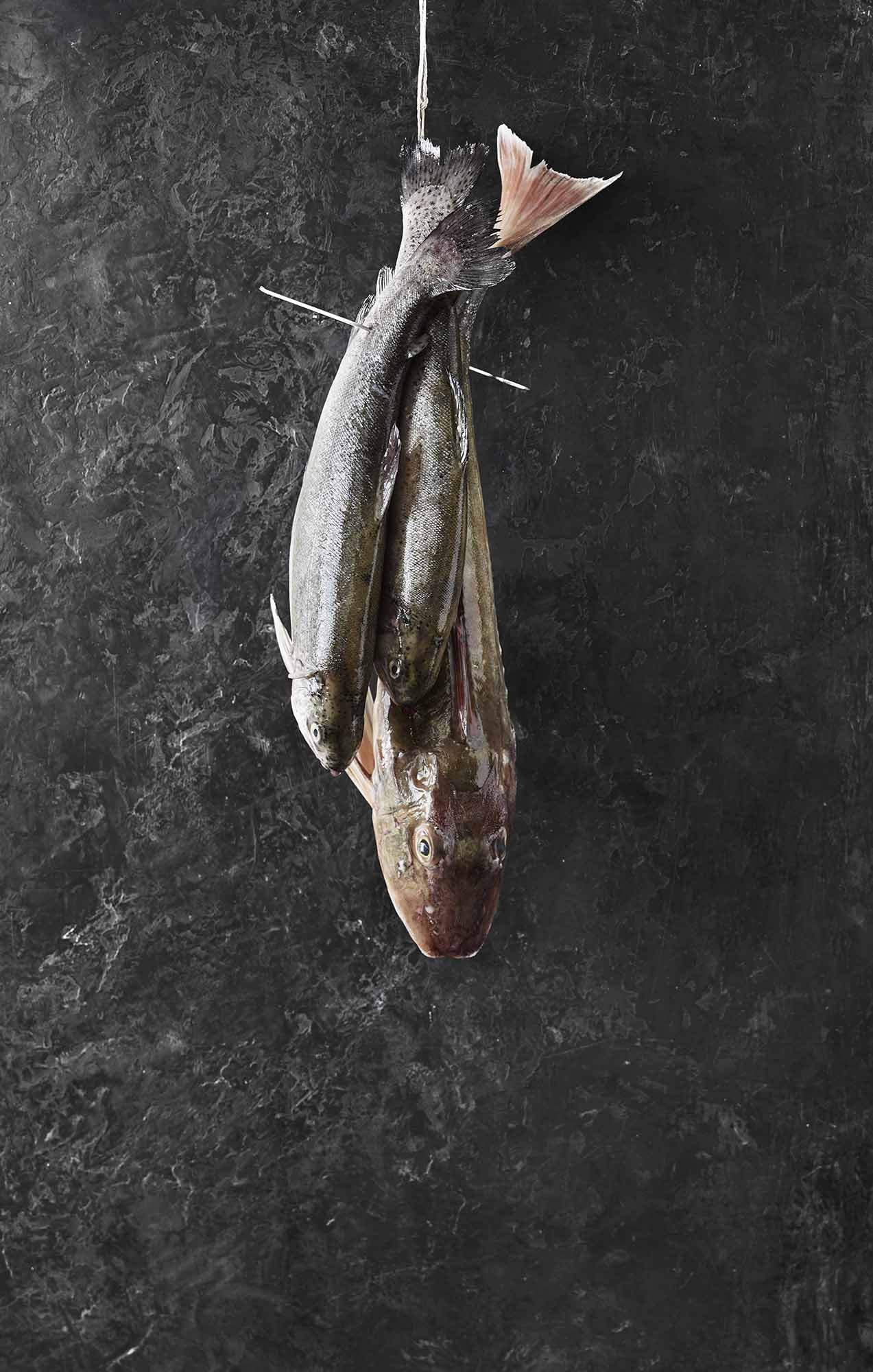 Lars Ranek - hanging fish