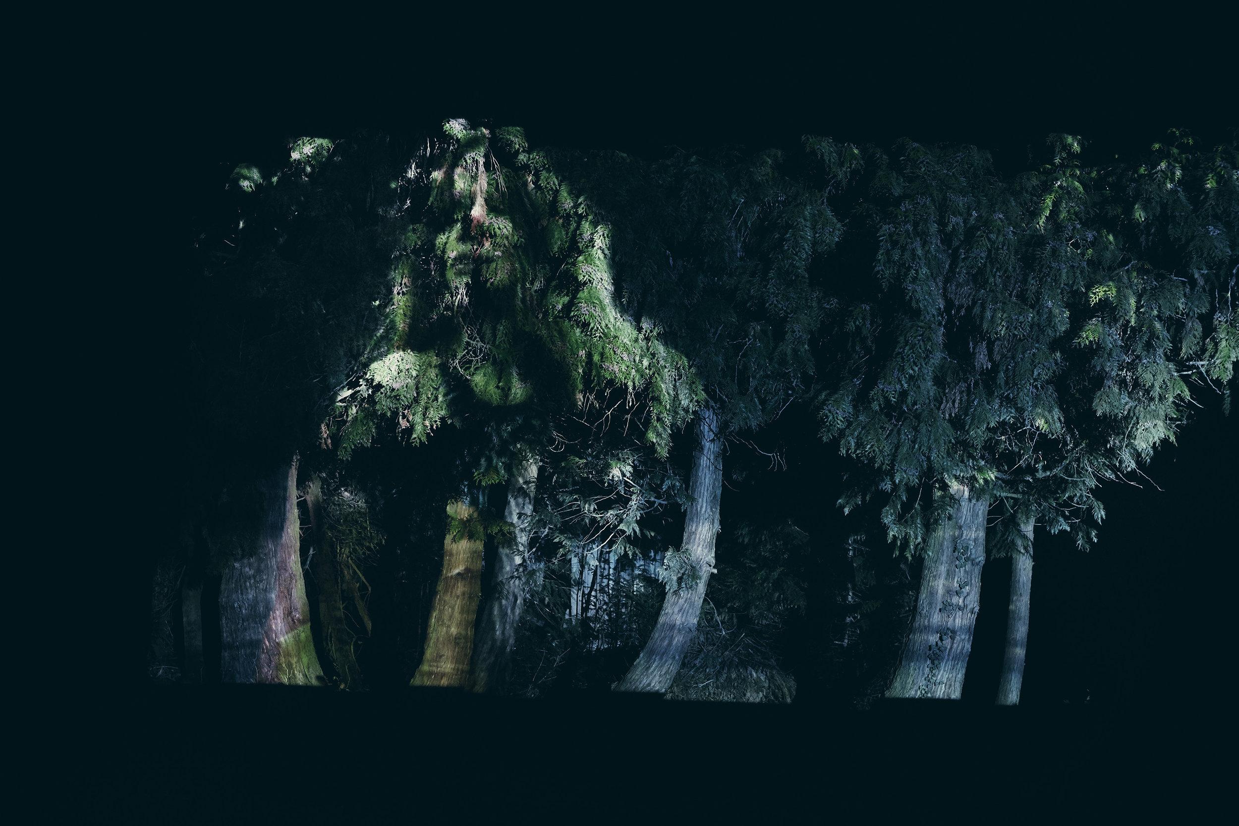 Anatol de cap rouge - crumbling decadence - trees