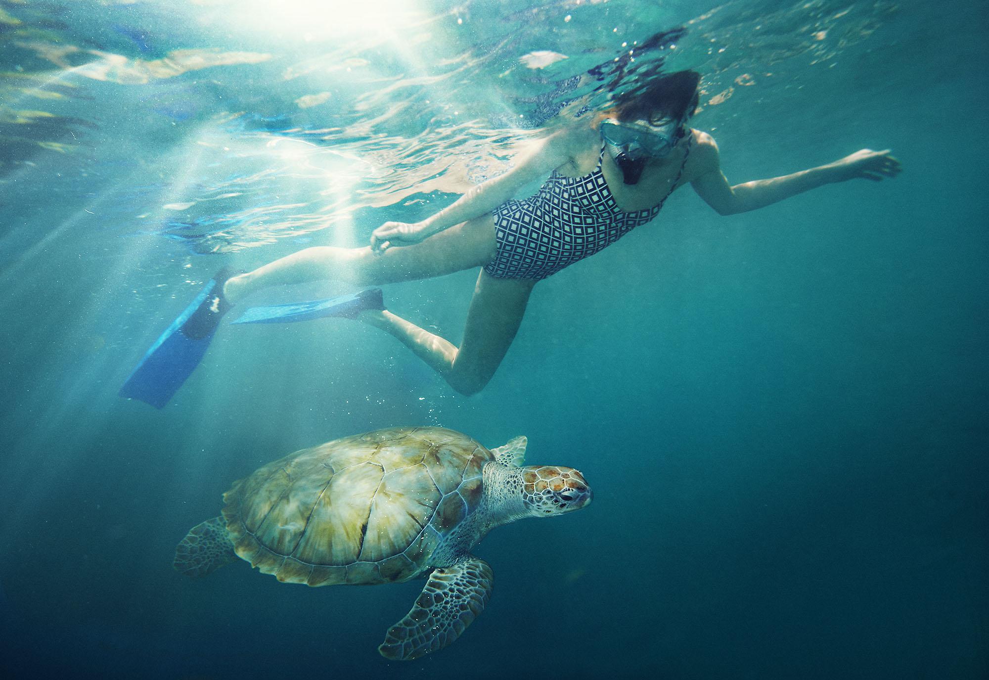 Karan Kapoor people snorkeling with turtle