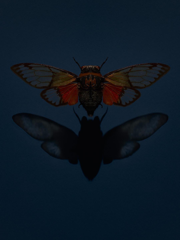 Tal SIlverman - butterfly
