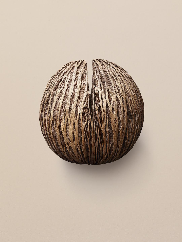 Tal Silverman nut