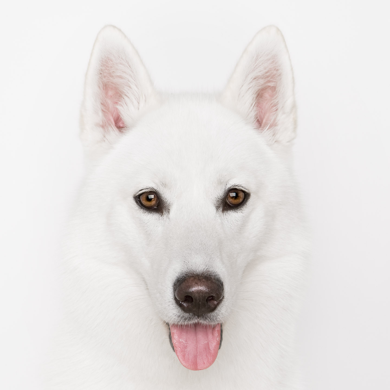 Tim Platt - white dog