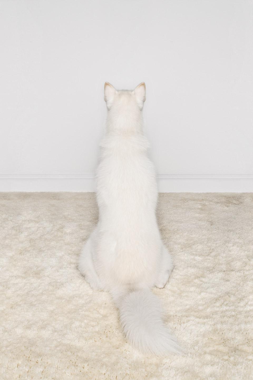 Tim Platt - white dog sitting