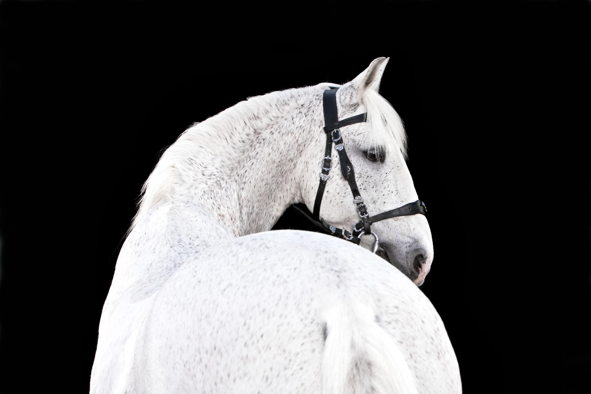 Tim Platt - back of white horse