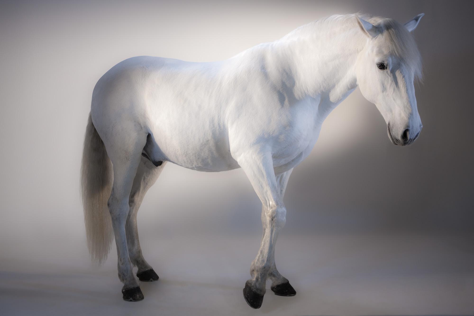 Tim Platt - white horse
