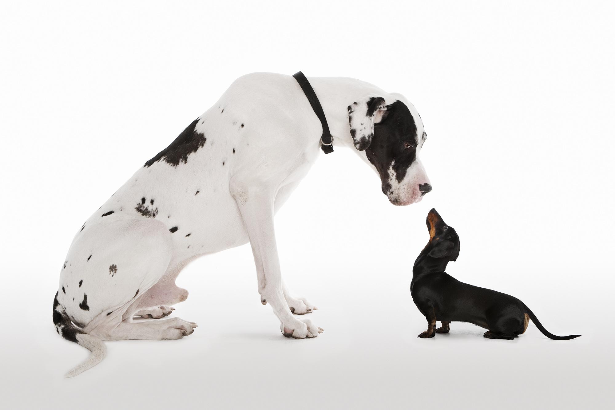 Tim Platt - profile of two dogs