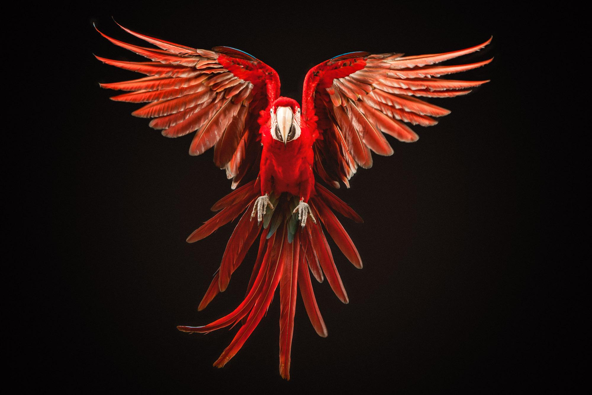 Tim Platt - Bird in flight