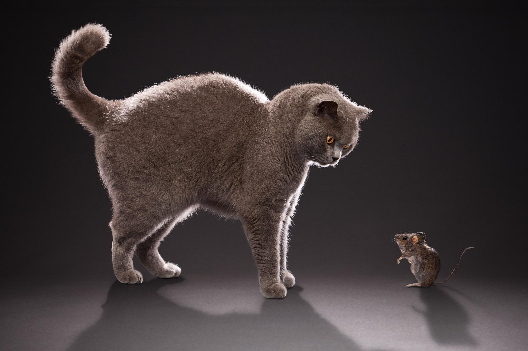 Tim Platt - Cat and Mouse