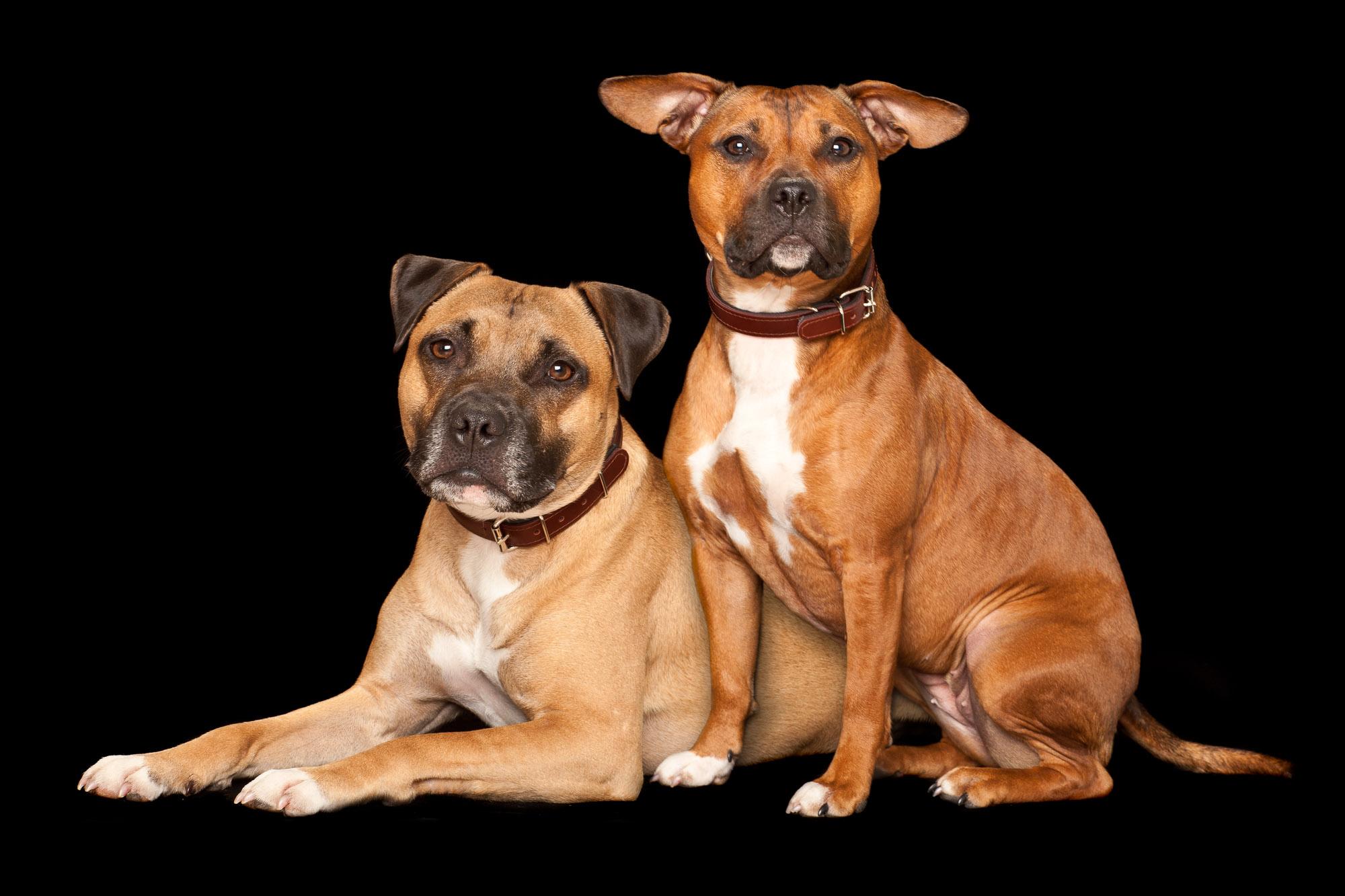 Tim Platt - portrait of two dogs