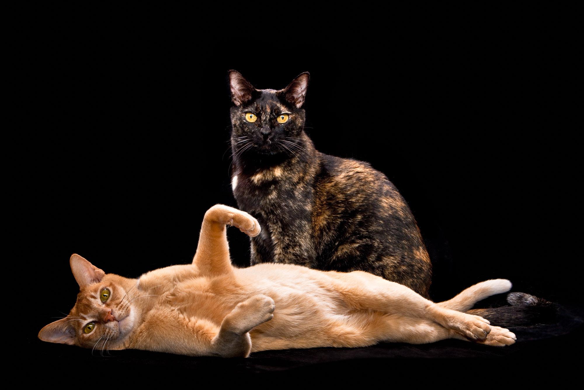 Tim Platt - Portrait of two cats